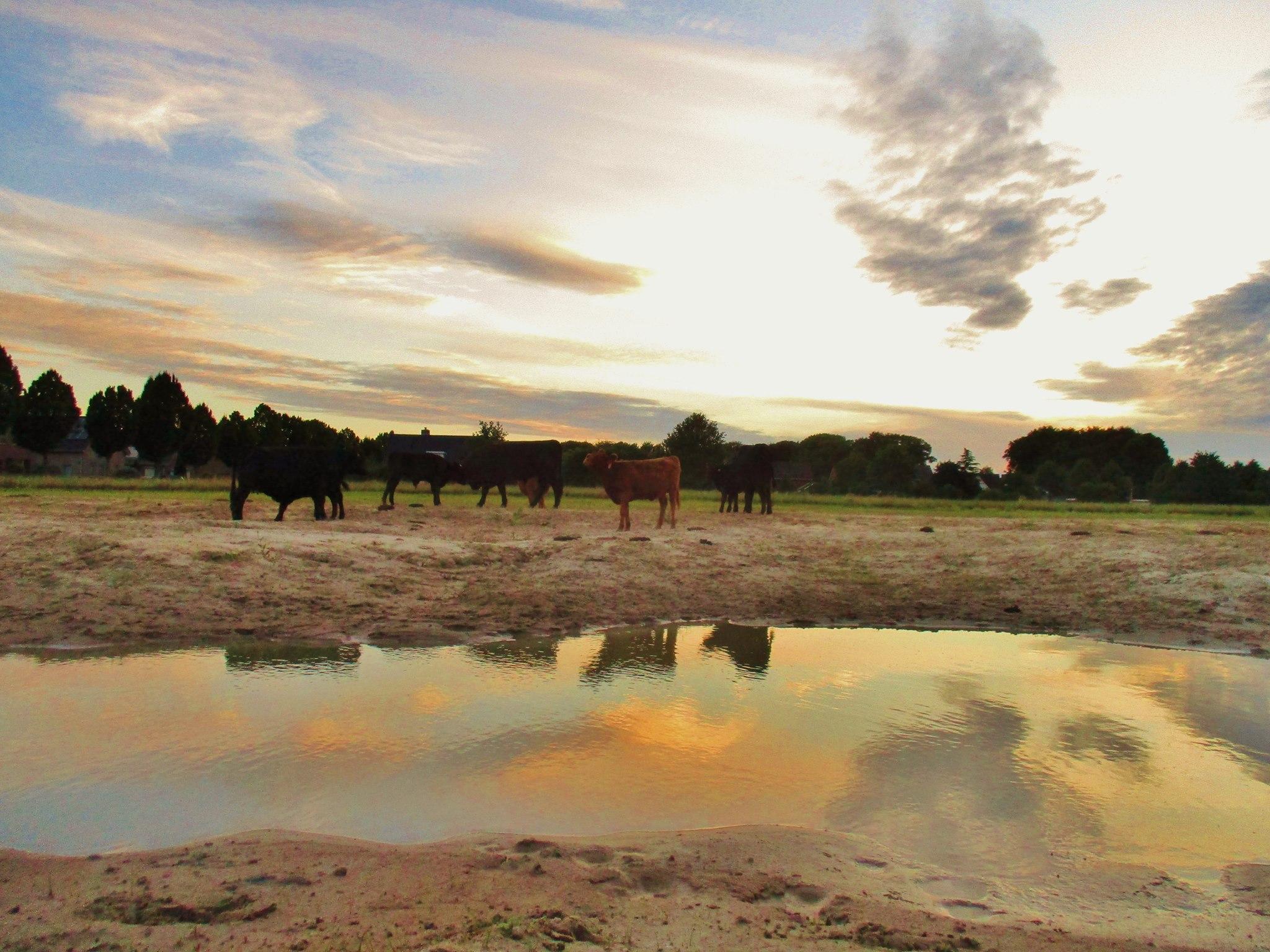 """Natuurgebied """"de TuuT"""" in Nieuw-Wehl"""